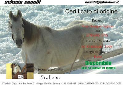 L'Oasi del Giglio riproduzione cavalli di razza Sopran Glaumix