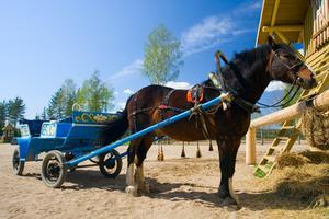 Come Guidare il cavallo