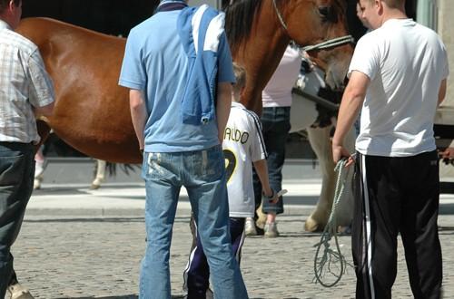 Comprare un Cavallo