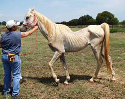 Vendita dei cavalli maltrattati