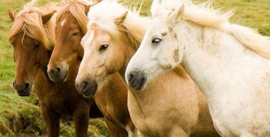 Salute del Cavallo