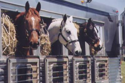 Trasporto del Cavallo