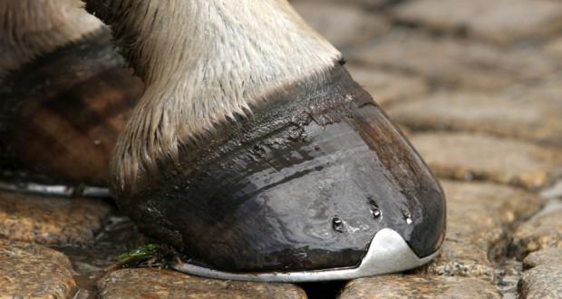La Ferratura del Cavallo