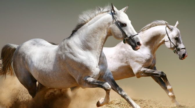 Come Ragiona il Cavallo