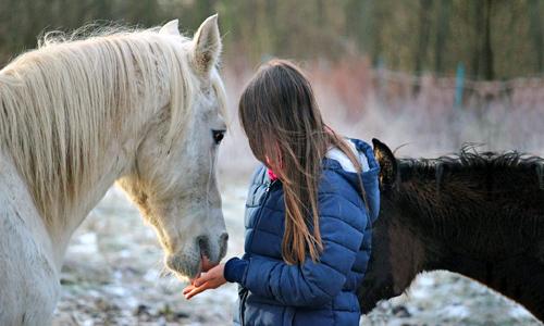 Comunicazione nel Cavallo