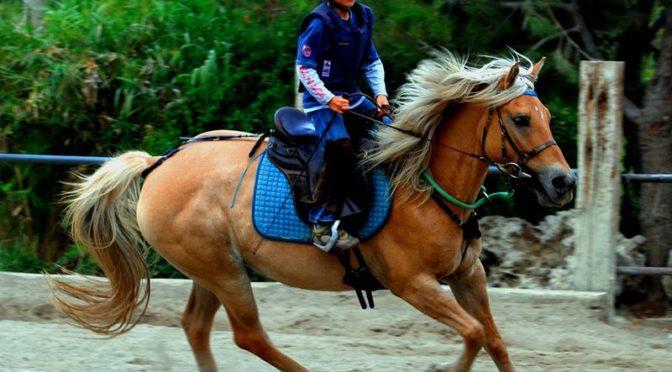 Andare a Cavallo per i Più Giovani