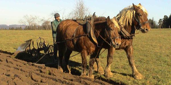 Cavalli ad Uso Lavorativo