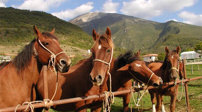 Cavallo del catria
