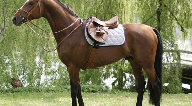 La Sella da Equitazione