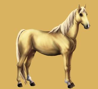 Razza Pony boero