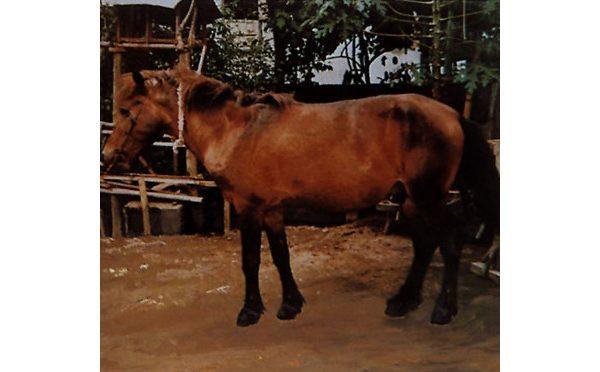 Razza Bali Pony