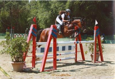 Razza  Pony Inglese da Sella