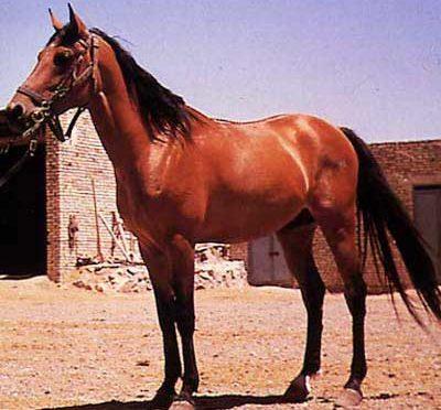 PERSIANO ARABO