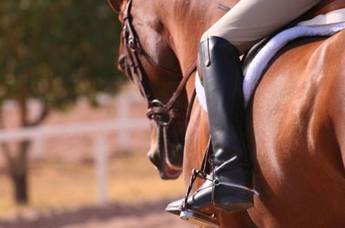 Equitazione: Esercizi Base