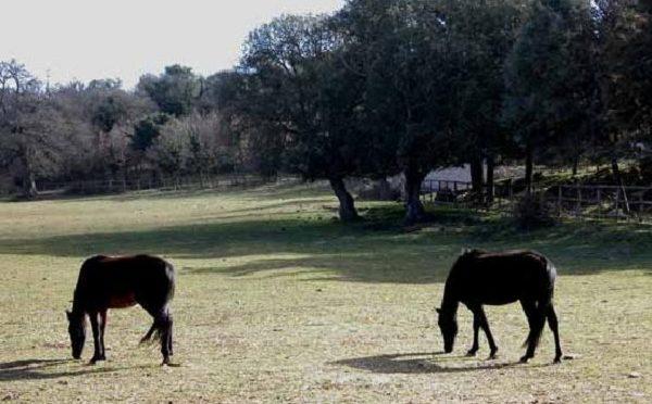Cavallo Sarcidano