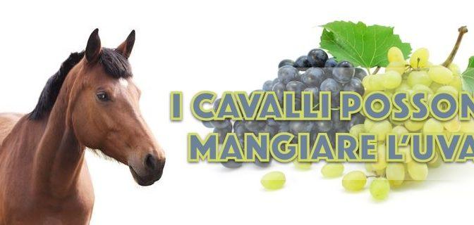 I cavalli possono mangiare l'uva con tutti i suoi semi?
