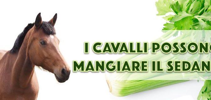 I cavalli possono mangiare il sedano?
