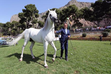 ANSA.it Sicilia Ippica: 150 purosangue a Palermo per Arabian Horses Cup 2017 Ippica: 150 purosangue a Palermo per Arabian Horses Cup 2017