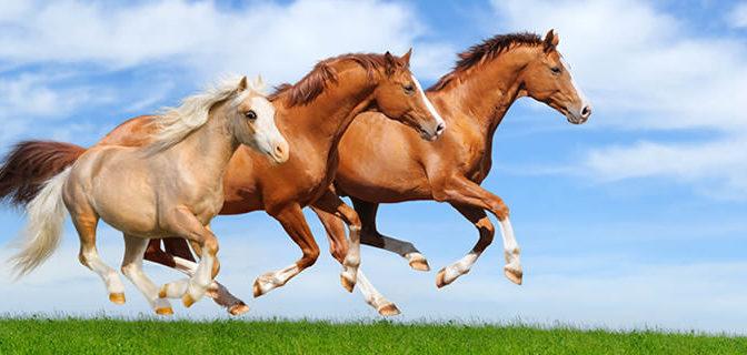 Sintomi e Trattamento della Tigna nei Cavalli