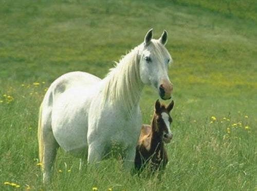 Rubriche sul mondo dei cavalli