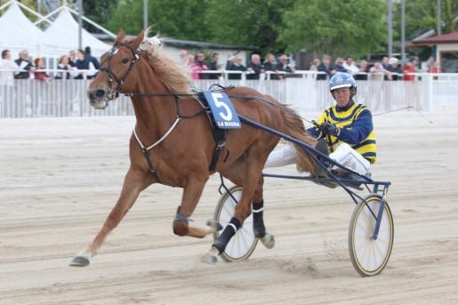 cavalli, rubati due cavalli campioni tra cui un discende da Varenne
