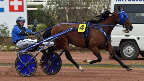 Ippica – Verso il Lotteria di Agnano, i 24 cavalli ammessi: la star è Timoko