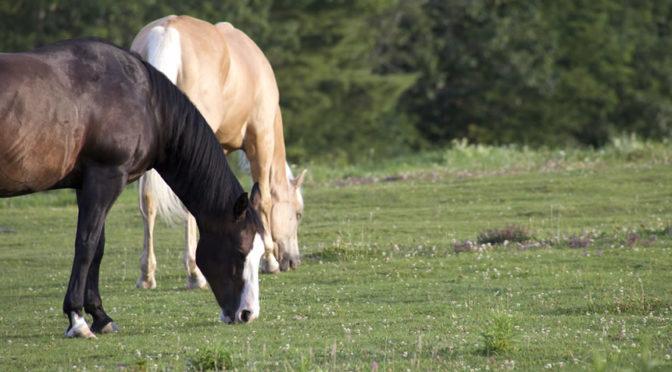 Primo soccorso veterinario dei cavalli, nuovo appuntamento alla Pubblica Assistenza di Colle