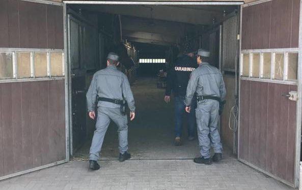 Braccia spezzate e torturato per ore: stalliere punito per avere denunciato maltrattamenti ai cavalli
