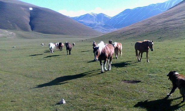 A Castelluccio, dopo il terremoto, sono tornati cavalli a stato brado