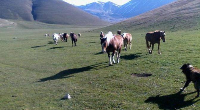 Castelluccio: cavalli (e monaci) senz'acqua per il terremoto