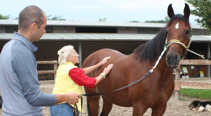 Innesca il potenziale del tuo cavallo con il TTouch