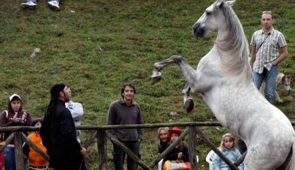 Mezzo secolo a… quattro zampe: il fascino di 'Comano cavalli'
