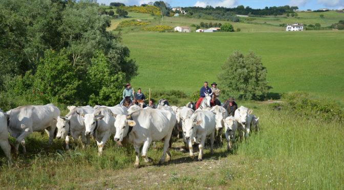 Mandrie, pastori, cavalli e tratturi